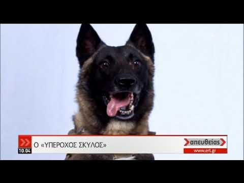 Κόναν: Η σκυλίτσα που βοήθησε στην σύλληψη του αρχηγού του ISIS | 30/10/2019 | ΕΡΤ