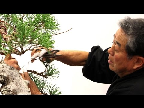 SakkaTen Literati Bonsai demo by Kunio Kobayashi