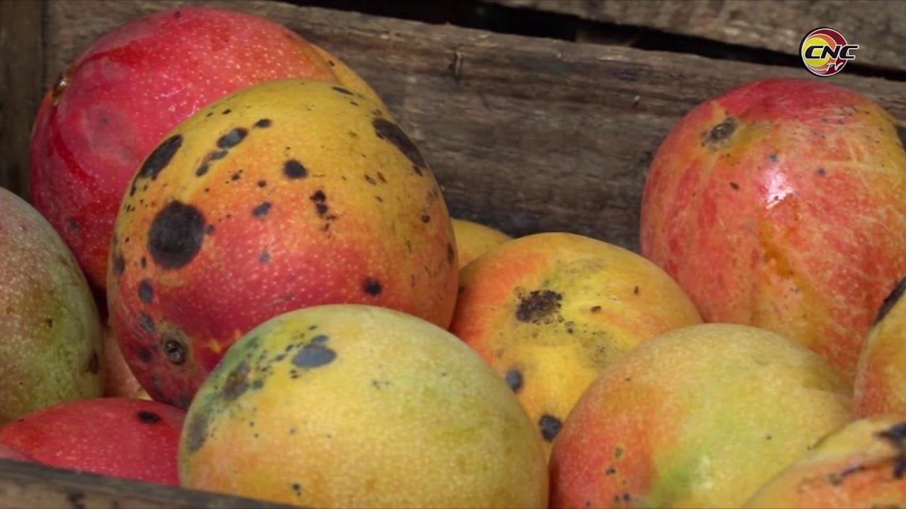 Niquereños lograron incrementar producción de alimentos durante el 2020