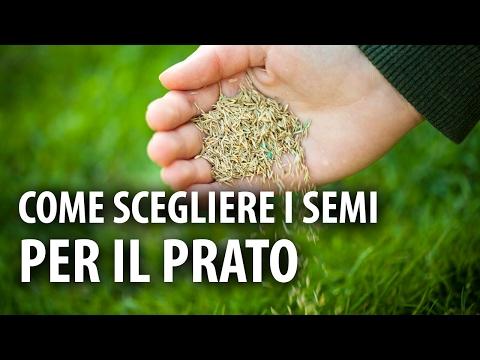 Come scegliere i giusti semi per il prato