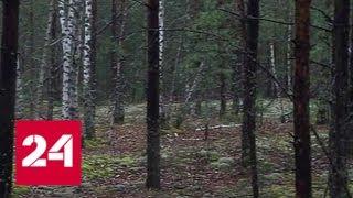 """""""Погода 24"""": 4-летний малыш сутки провел один в лесу - Россия 24"""
