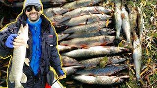 Рыбалка на нижней волге в ноябре