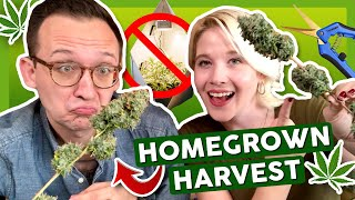 How to Harvest, Trim, and Cure Your First Time Growing Weed –  ✂️ Grow Journal 4: Ep. 3 by That High Couple