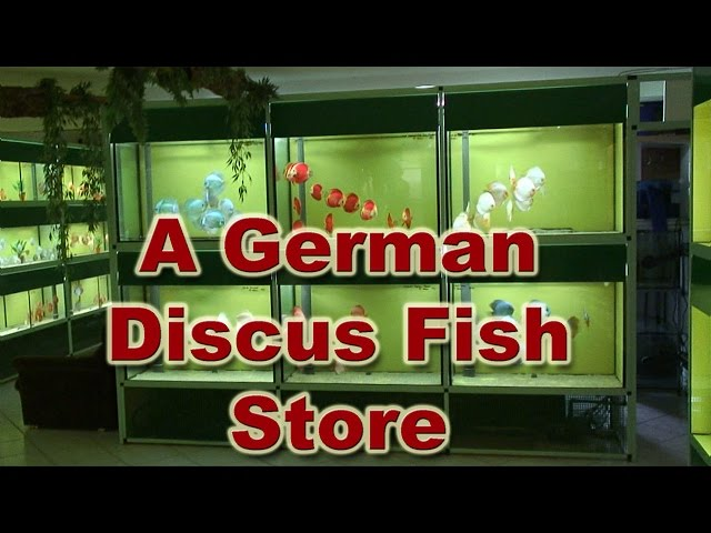 Diskus Markt - A Great Discus Fish Store in Germany