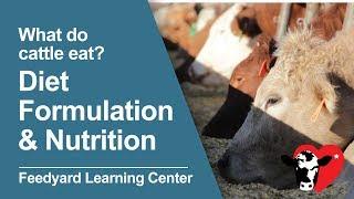 What Do Cattle Eat: Diet Formulation & Nutrition
