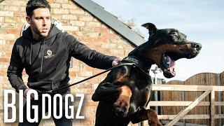 Intruders Beware! The World's Toughest Guard Dogs | BIG DOGZ