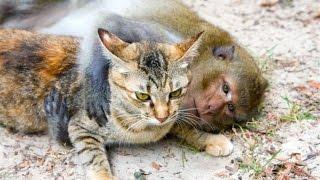 Смешное видео с кошками!Видео кошки! Прикол обезьяна!