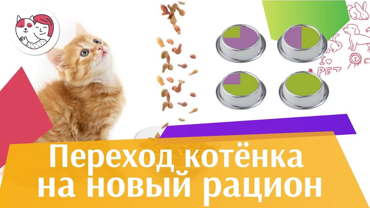 Как перевести котенка на новый корм на ilikepet