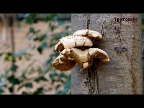 Паразиты в организме человека симптомы и лечение народными средствами