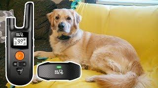 Dog Care Dog Shock Collar Review // Remote Dog Training Collar