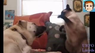 лучшие ПРиколы № 6  Видео приколы смешное видео с котами и кошками  ТОП приколы 2017 коты и ежики