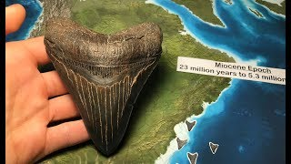How I Find GIANT MEGALODON Shark Teeth and Other Fossils!!