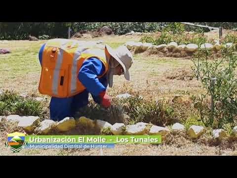 Limpieza y Mantenimiento  de áreas Verdes en Los tunales y Ubr. El molle