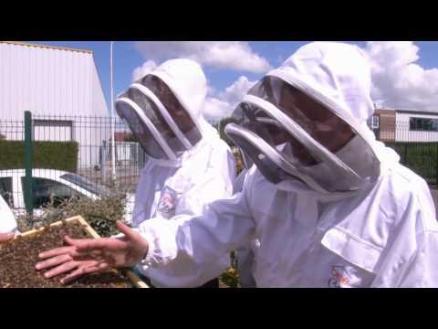 BEECITY unites employees on the matter of biodiversity
