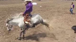 All 5 Wild Horse Races - 2016 Miles City Bucking Horse Sale