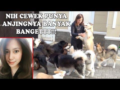CEWEK INI PUNYA ANJING GEDE BANYAK BANGET!!!