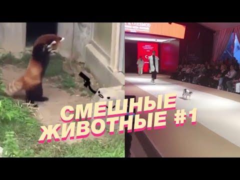 Подборка смешных видео про животных #1