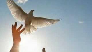 مازيكا jaafar hasan طير الحمام - الحان وغناء جـعـفـر حســن تحميل MP3