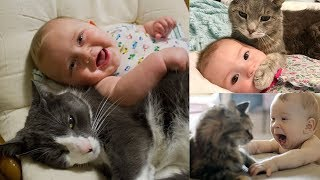 Cute Cat And Baby - Cat Playing With Baby - Best Of Cute Cats Love Babies Compilation