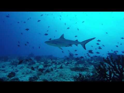Plongée sous-marine aux Maldives