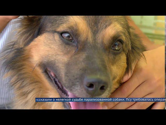 Ангарчане за день собрали деньги на лечение собаки