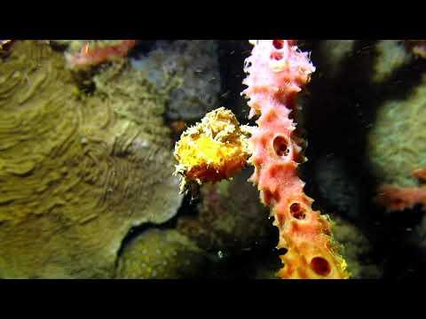 plongée de nuit Nosy Be Madagascar