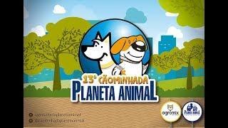 Planeta Animal 13ª Cãominhada