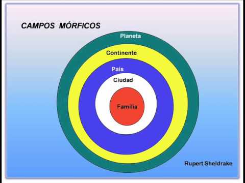 Campos morfogeneticos rupert sheldrake