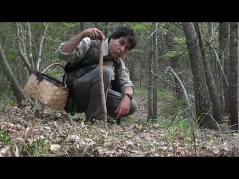 Gli acorus si radicano in trattamento di un fungo di unghie