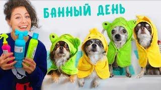 Собаки купаются! Банный День для питомцев! Что натворила Юми? Чем отличается Эйван от девочек?!