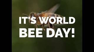 World Bee Day 2019