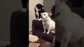 Кот долго думал как отомстить псу видео