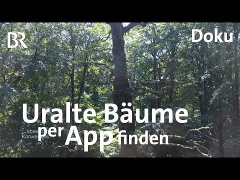 Neue App: Spessart-Bäume mit Geschichte | Zwischen Spessart und Karwendel | Doku | BR