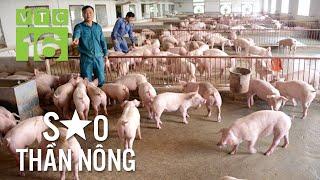 Vua lợn thu 10 tỷ/năm nhờ bí quyết đặc biệt   VTC16