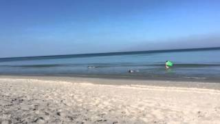 Seaside Destination - Cathy Shea School