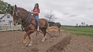 DRAFT HORSES: Working The Garden