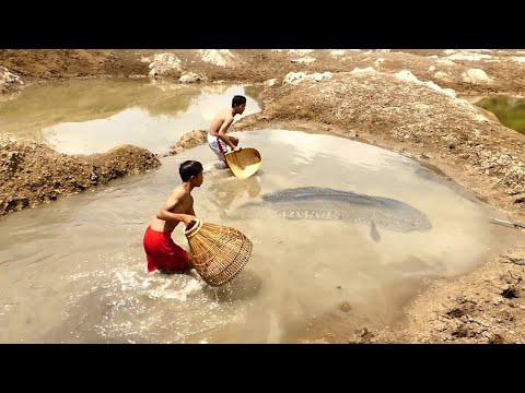 Unique Hand Fishing ! Man Catching Lot of Country Fish in Pond Mud Water | Fishing in Dry Season