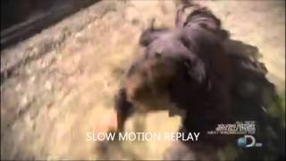 FAKE: bear grylls almost hit by train PROOF IT'S NOT REAL