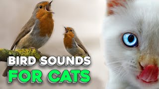 Bird Sounds for Cats