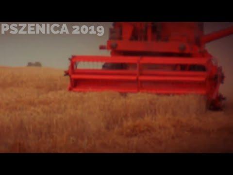 ☆ ŻNIWA 2019 ☆ PSZENICA ☆ URSUS C360 + BIZON Z056 ☆