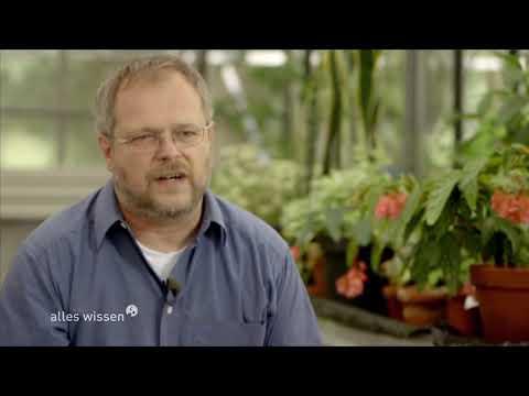 Büropflanzen - gesund oder überflüssig