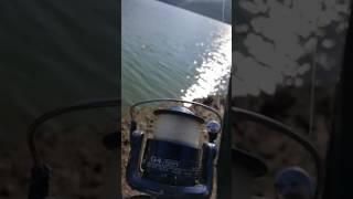 Yuvacık barajı sazan avı Mehmet Arslantaş