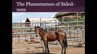 Effect of Lateralization on the Gentling and Training of Wild Mustangs