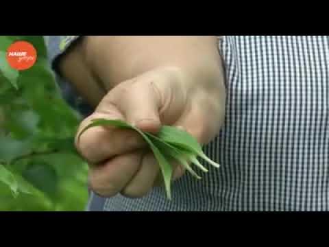 Размножение растений вегетативным способом