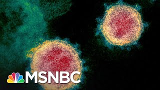 Infectious Disease Expert's Plan To Crush Coronavirus In 10 Weeks   The 11th Hour   MSNBC