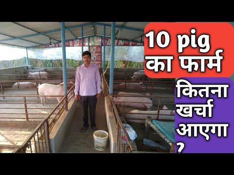 , title : '10 pig से शुरू करें सूअर पालन । Pig farming will start from 10 pig । kisan farming