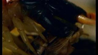 Centipede vs. Grasshopper Mouse   National Geographic thumbnail