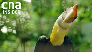 A new home for Asia's largest bird park | The Great Migration | Full Episode