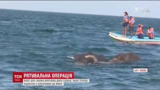 В Шрі-Ланці визволили з моря двох слонів