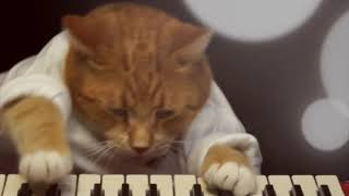 Keyboard Cat Short Film 4